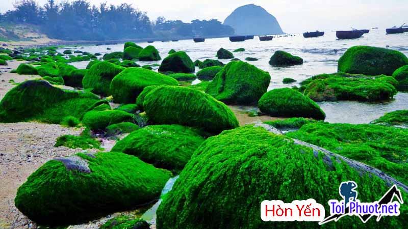 Rêu xanh phủ kín đá ở Hòn Yến